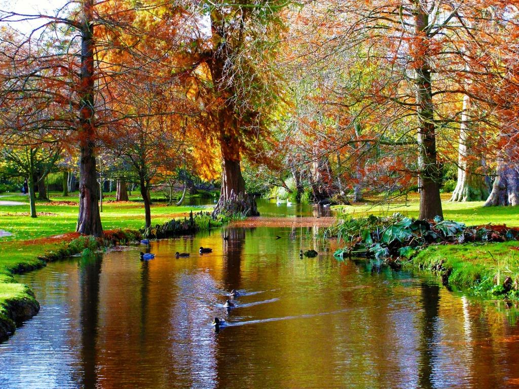 Bushy Park, UK