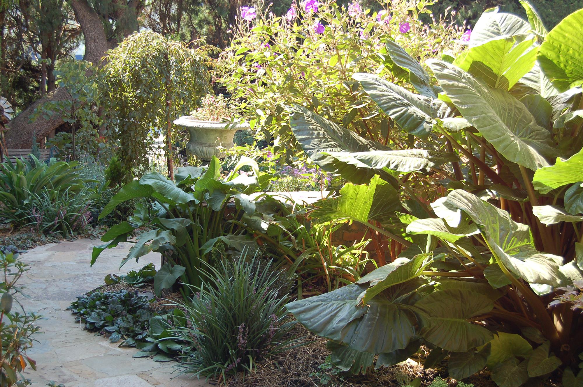 Melbourne Garden.jpg