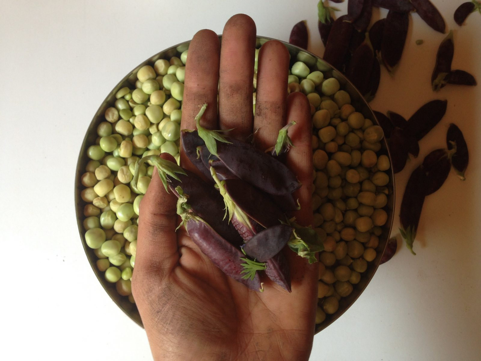 What? Purple peas?