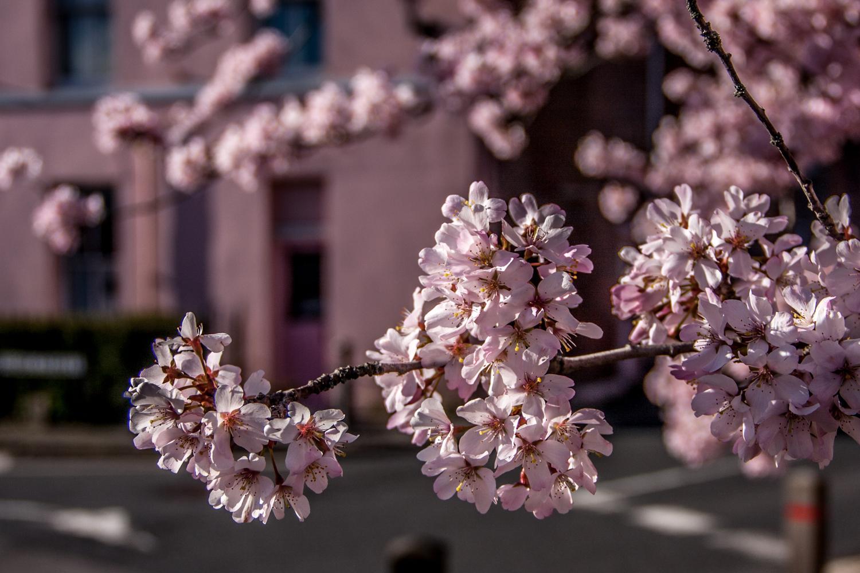 spring-5.jpg