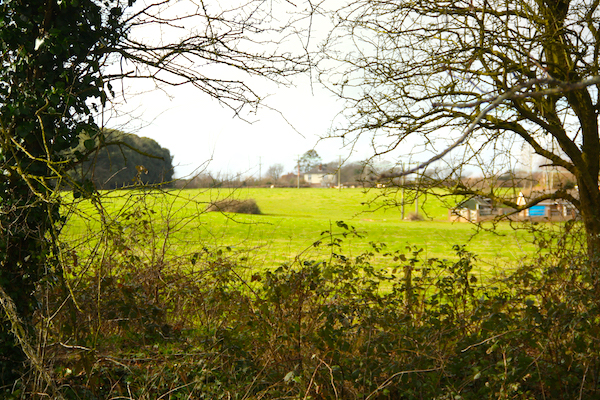 The greenfield site in Posbrook Lane where Forman Homes want to build 150 houses.