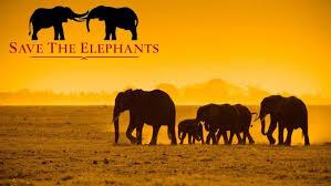 elephants.jpeg