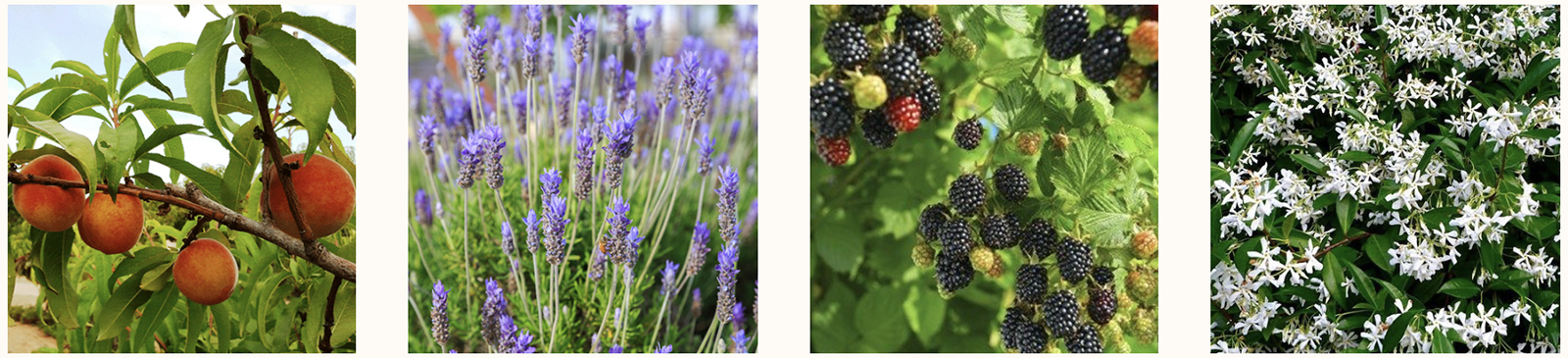 grange-plants.jpg