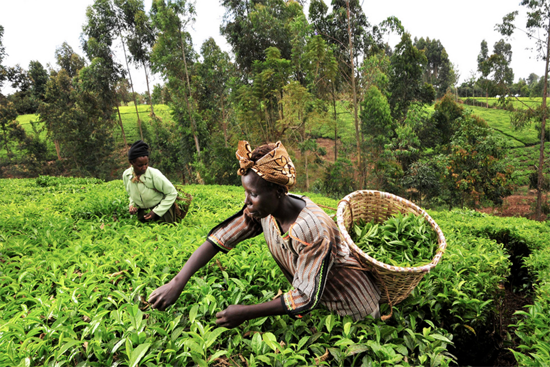 Securing Access to Farm Land through Community-led Lease Agreements: Realizing the SDGs in Western Kenya - SDG Knowledge Hub