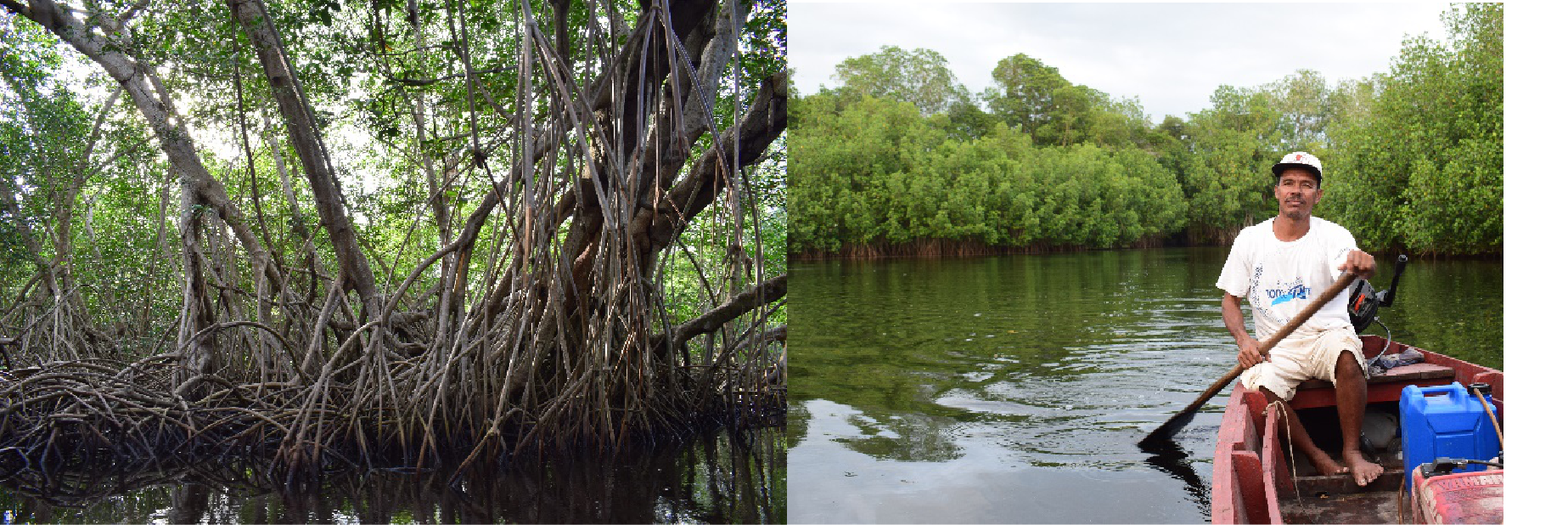 Community-managed mangrove conservation, an EbA measure in coastal areas / Photo: Marai El Fassi, TMG Research