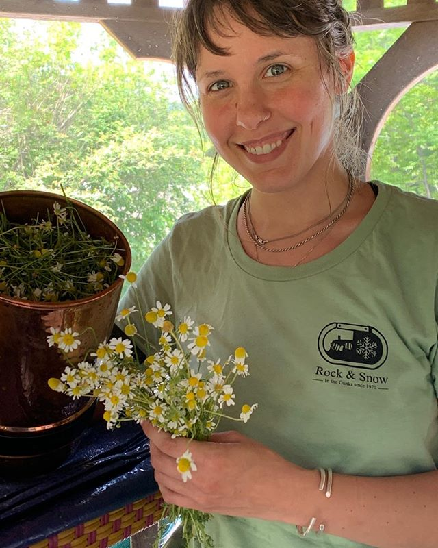 Here is Becky in the midst of making a chamomile hydrosol this summer.  Come experience our fresh from the garden pure plant hydrosols.  We've been making them almost weekly and currently have stocked in the shop calming and mood elevating lemon balm, the aromatic, uplifting and adaptogenic powerhouse Tulsi, and the supreme bug repellant that you all will want to spray all over your body just for it's lovely scent and vibrations rose geranium.  #localplanthydrosols #naturalbugrepellant #moodenhancer #supportyourlocalherbshop