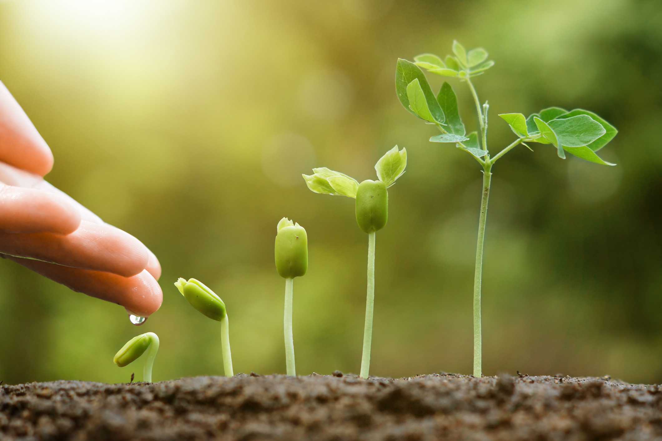 Seeds of Understanding Sprout in Fertile Minds