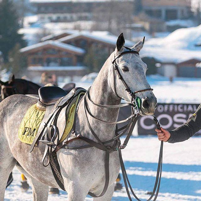 Snow Polo would not be Snow Polo without our beloved Polo Ponies. #snowpolo #snow #polo #kitzbuehel #kitzbühel #tirol #polopony #poloplayer #pololifestyle #instatravel #travelgram #tournment