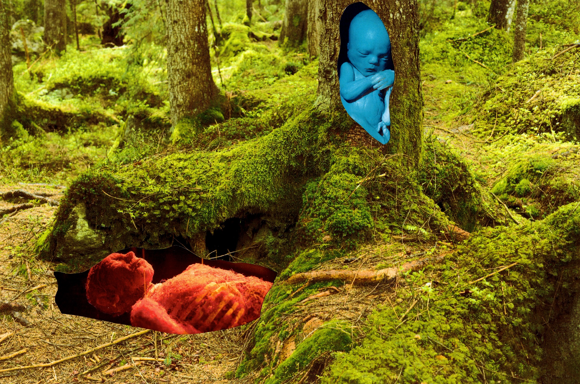 harit-srikhao-midnight-rainbows-young-old-forest