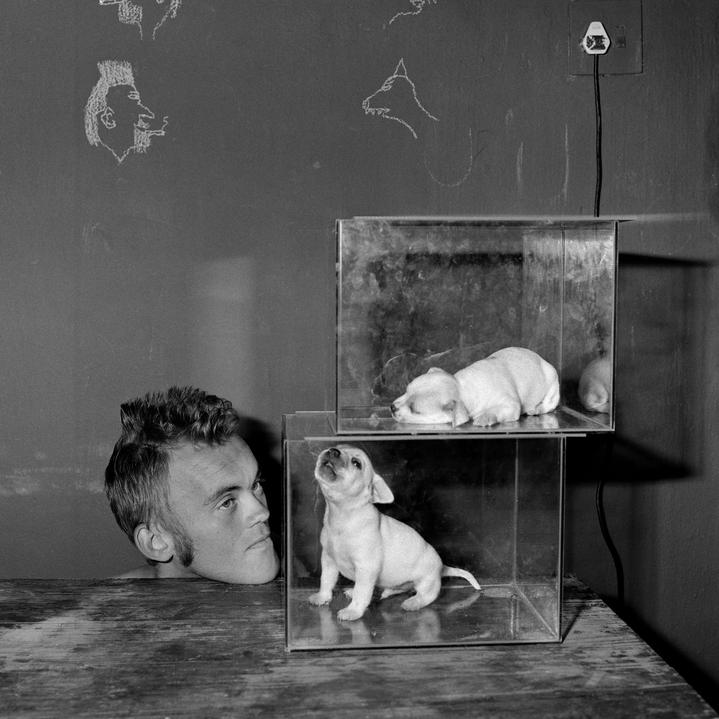PUPPIES IN FISHTANKS (2000). CREDIT: ROGER BALLEN
