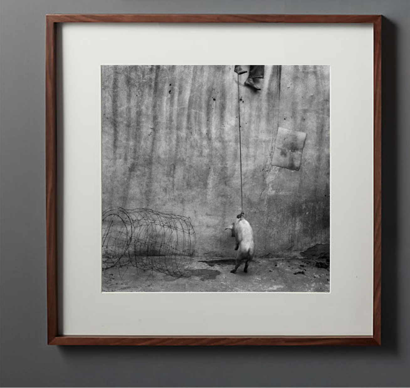 "Roger Ballen's The Hanging Pig (2001) - Size: 15"" x 15""Glimpse into the lives of society's outsiders with this signed original print by Roger Ballen.(Photo Credit: Kunzt Gallery/Roger Ballen)Discover the full story in Issue 9."