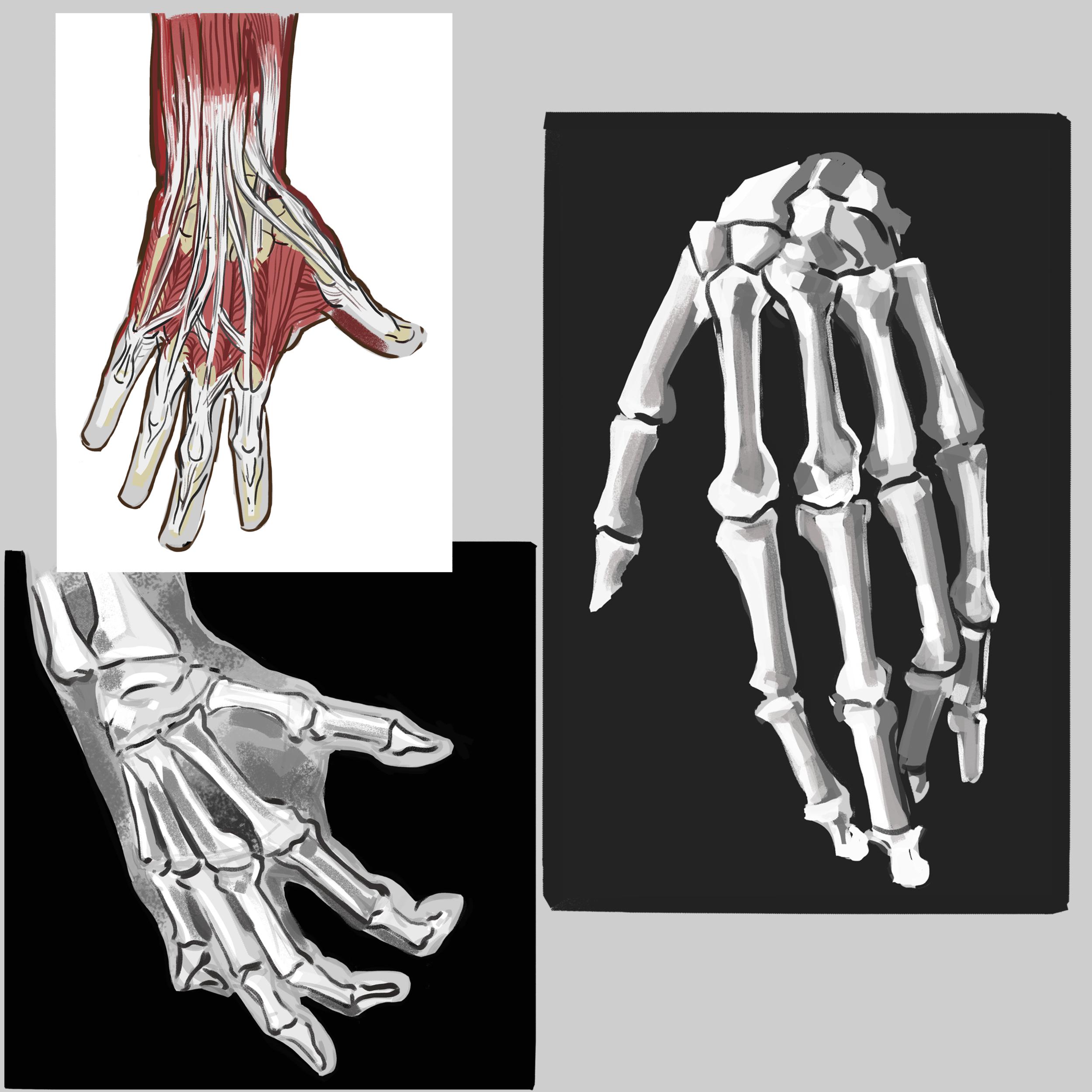 hands boneshl.png