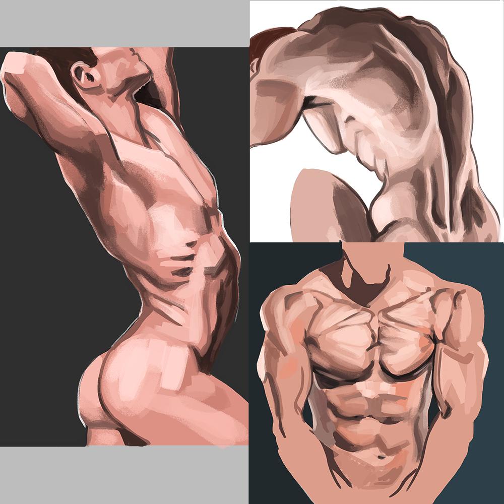 MS Male torsos hl.png