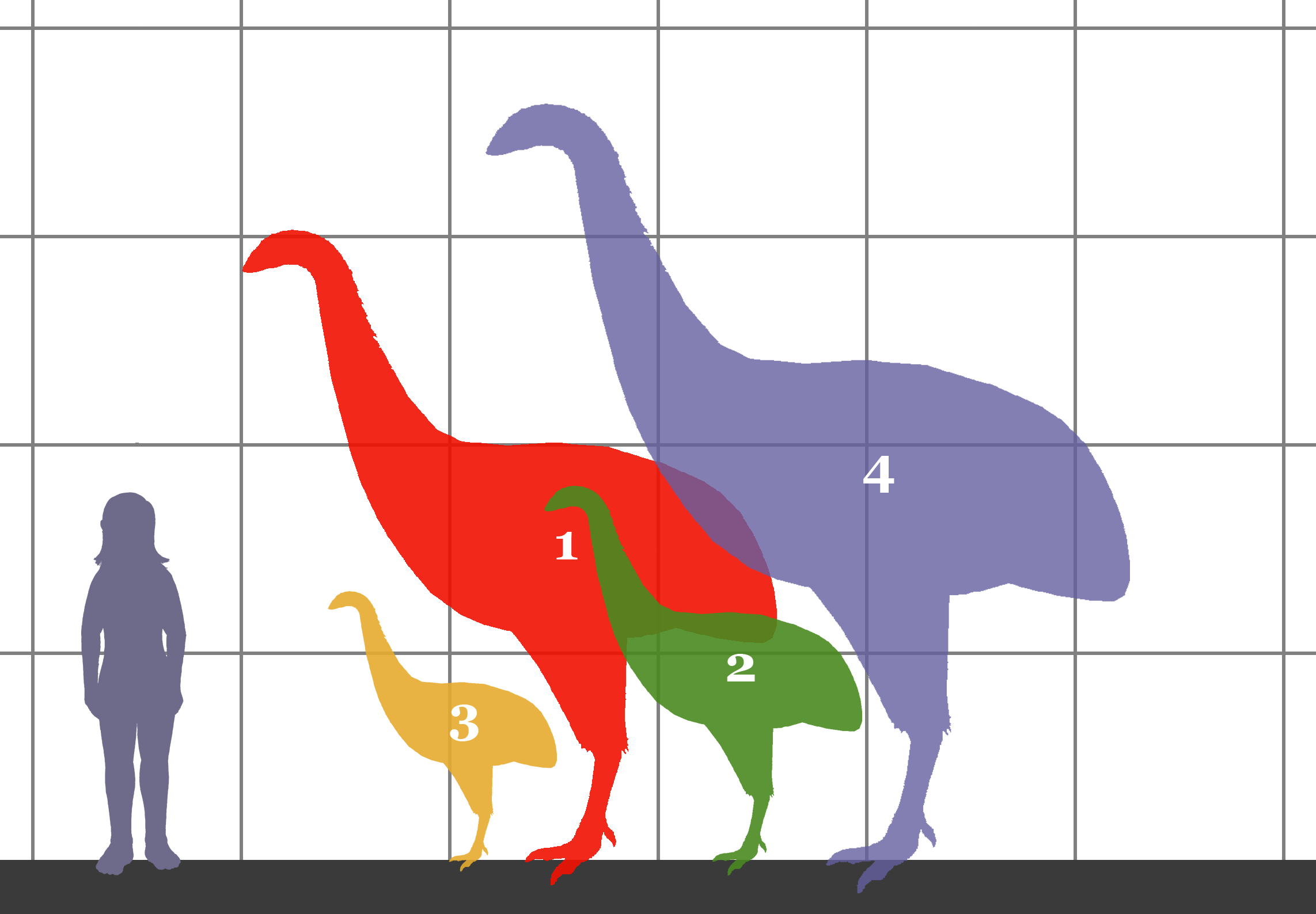 Size of ancient birds of New Zealand, including the Dinornithidae