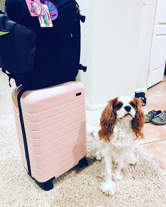 Who's your travel buddy? Meet my boy, Sunny! 🐶 #travel #travelblog #travelblogger #photography #worldtraveler #traveltips #traveladvice #adventure  Suzanne Rocco – Travel Blogger Website & Blog: www.HolisticTravel.com Twitter: holitravel Instagram: HolisticTravelers Pinterest: HolisticTravelers Facebook: Suzanne Rocco - Travel Blogger
