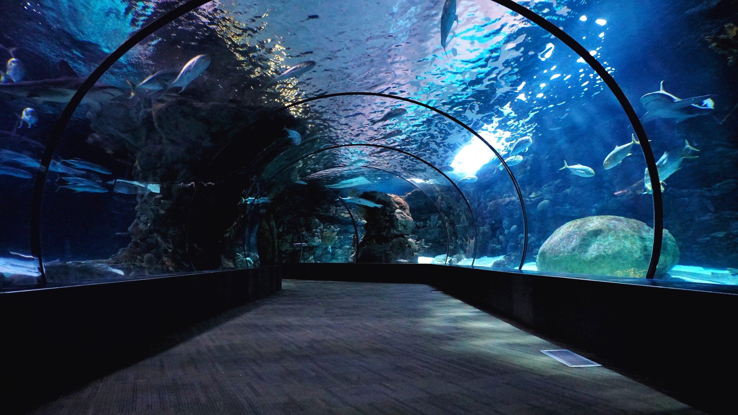 Ripley's Aquarium, Ontario, Canada
