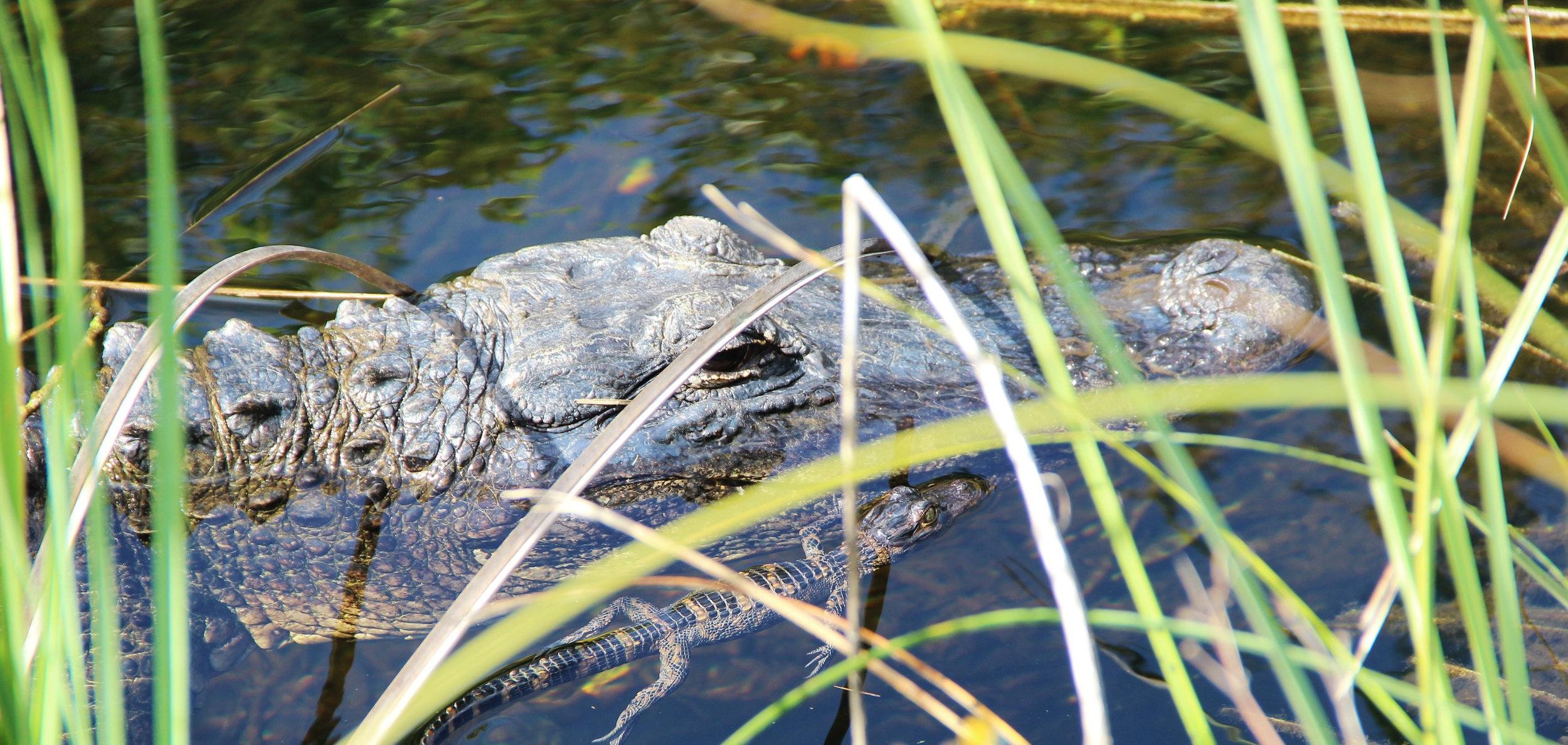 Airboat Everglades & Grasslands Tour