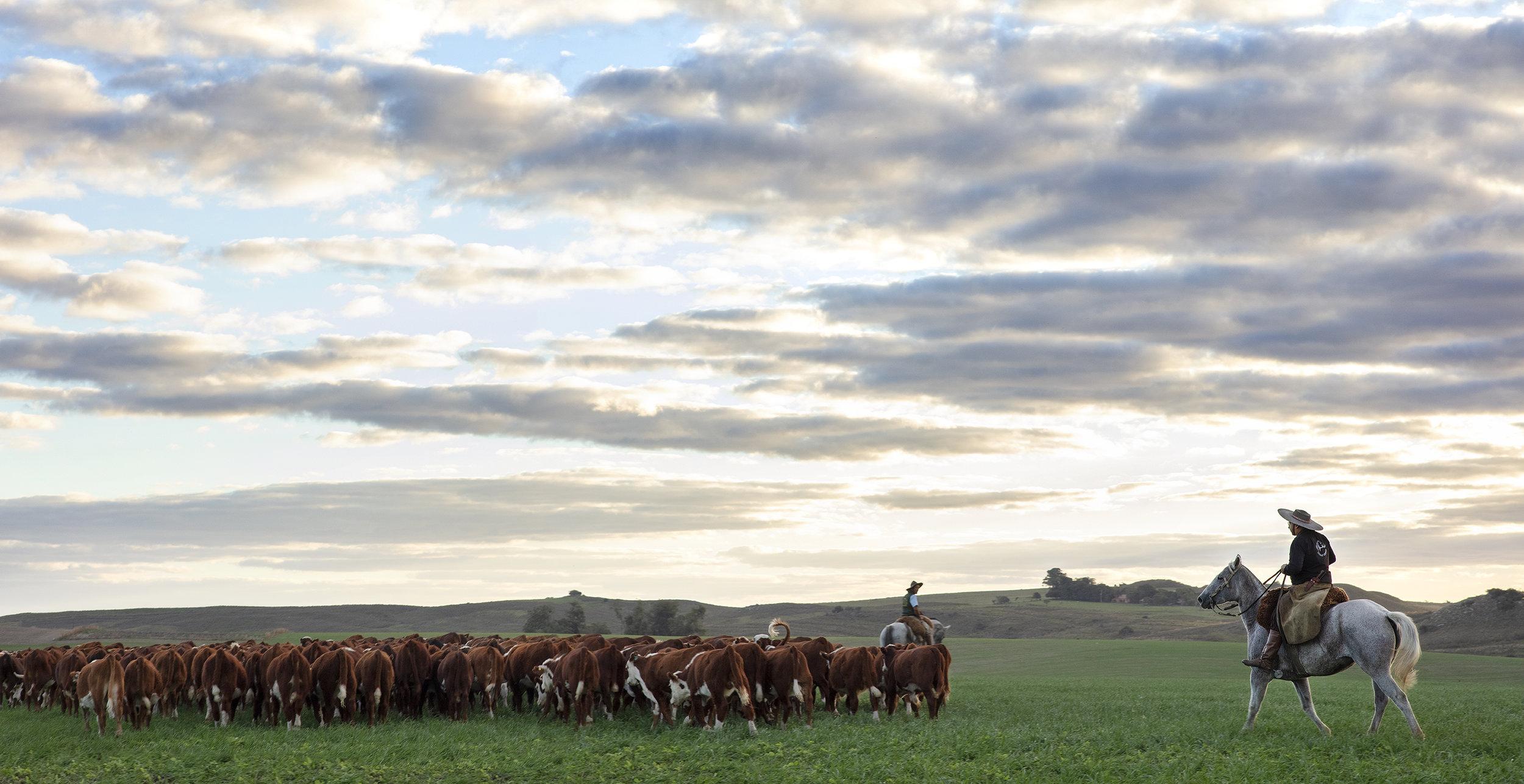 190417NH_brazil_maritza_farm_day1_2792.jpg