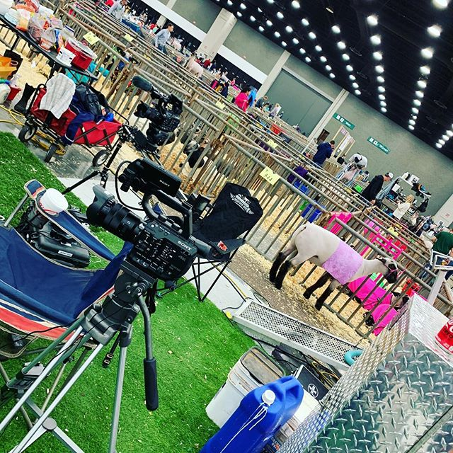 Sliders for sheep.... #videographer #shootinginterviews #freelance #lotsofsheep