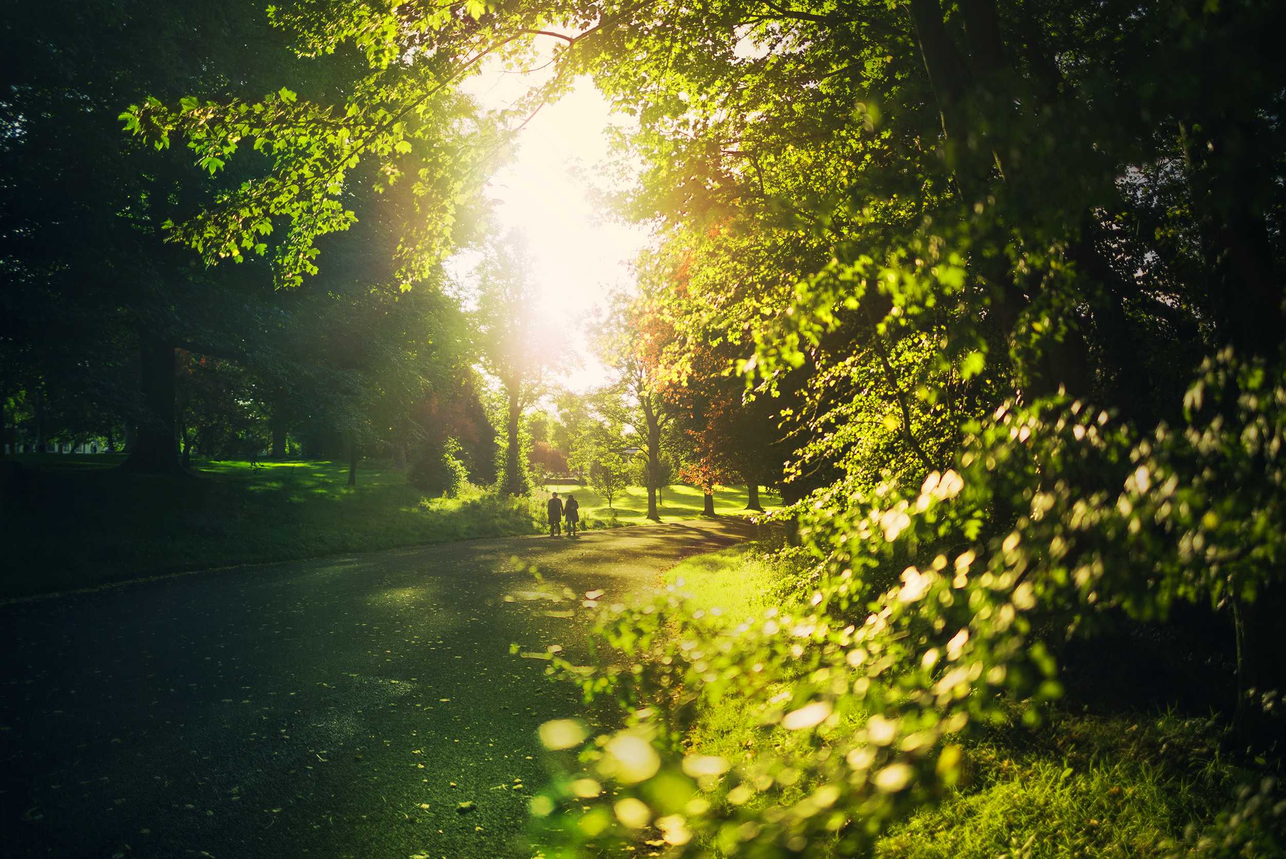 Walk-in-Garden.jpg