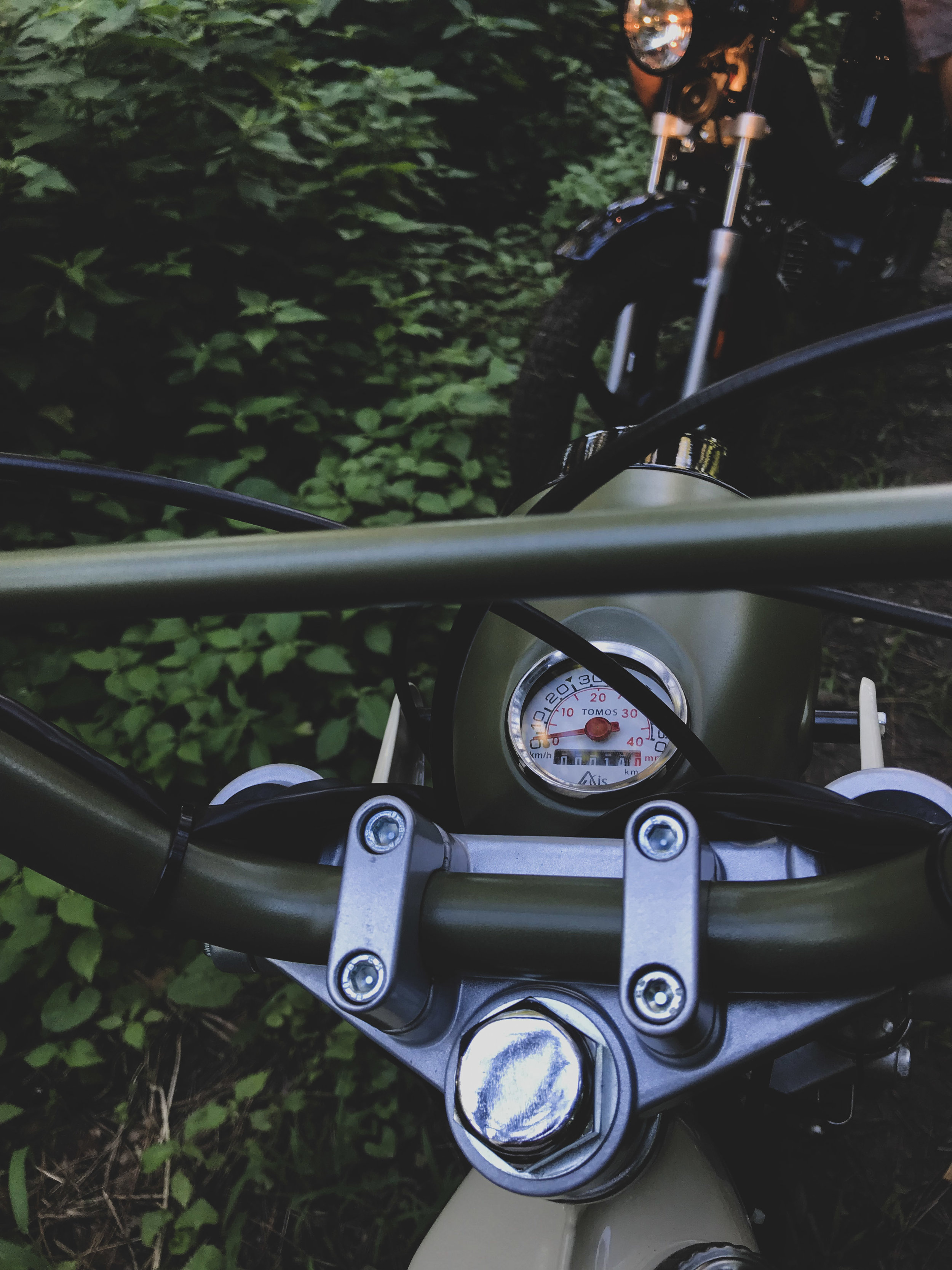 Clover on the trail.jpg
