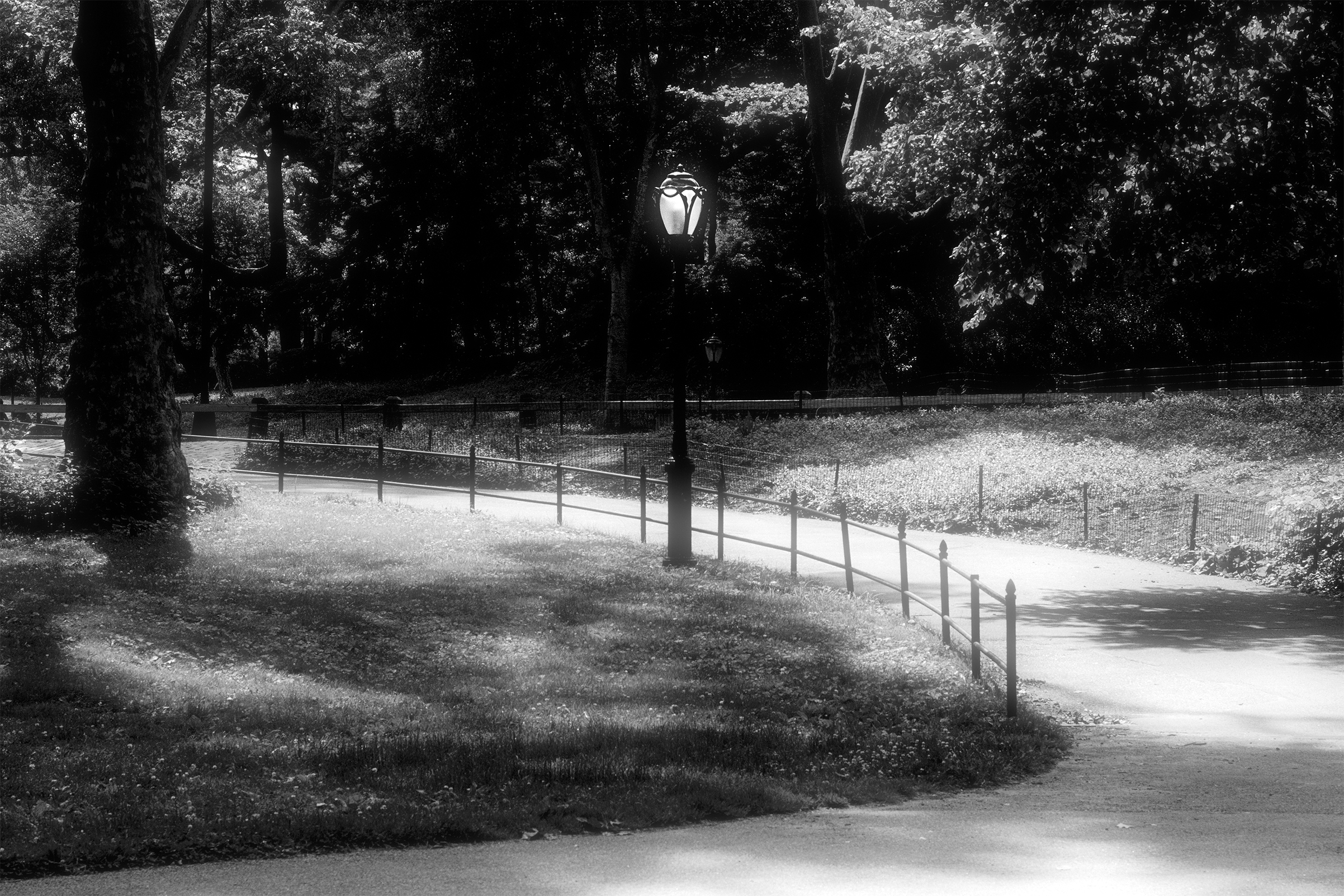 Curved Path,  Central Park, NYC