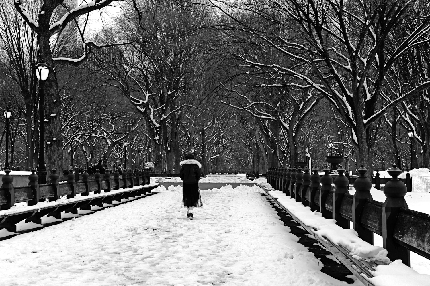 Winter Walk, Central Park, NYC