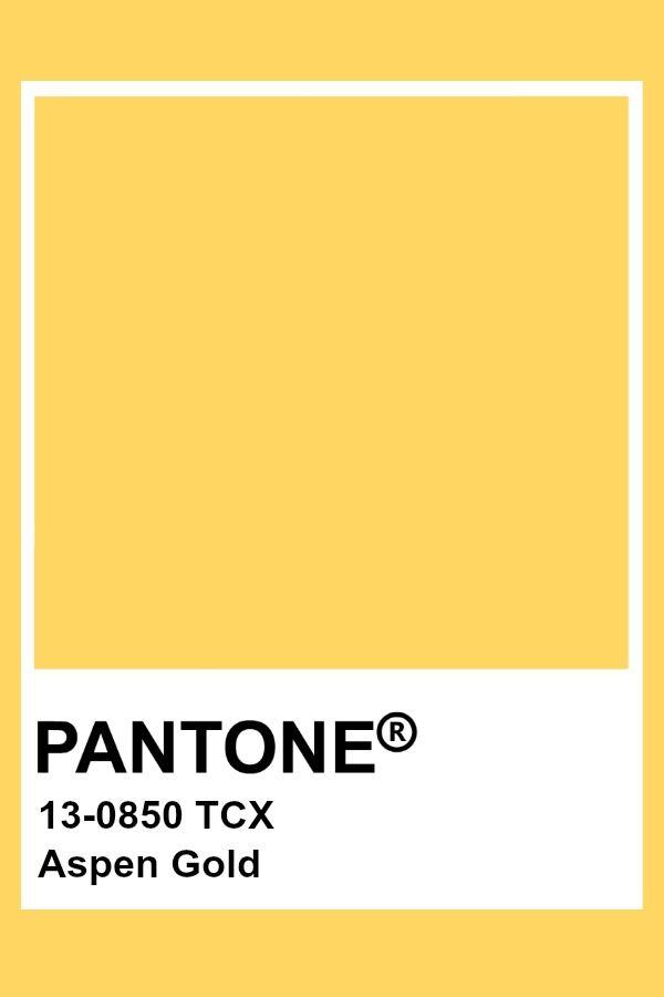 aspen yellow2.jpg