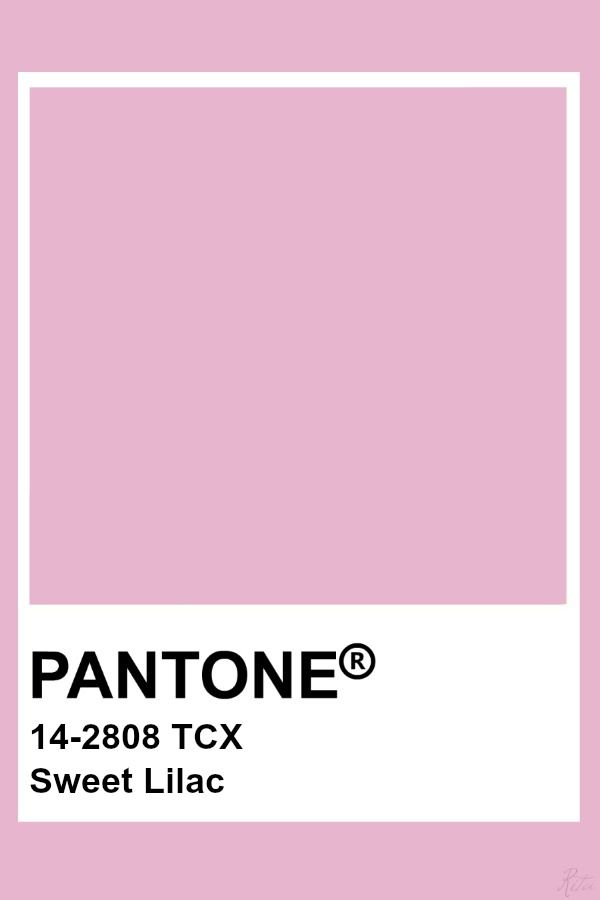 sweet lilac.jpg