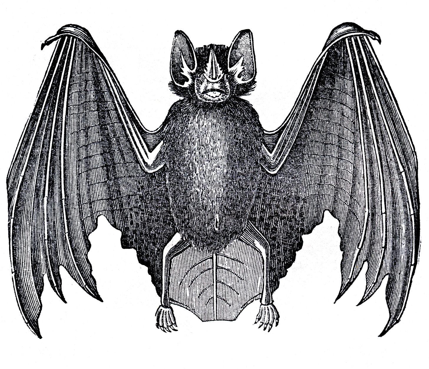 bats-graphicsfairy003b.jpg