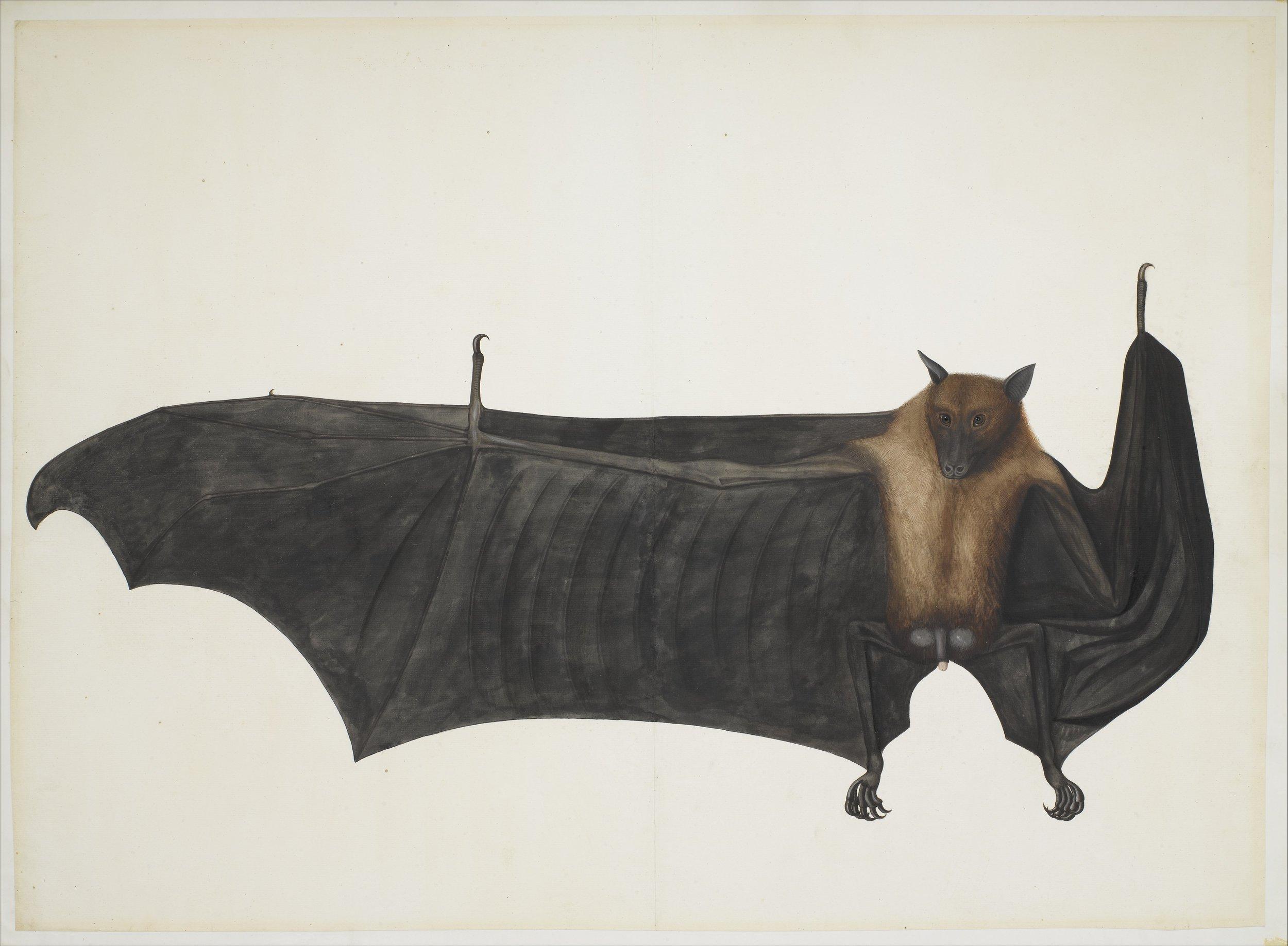 bat-painting.jpg