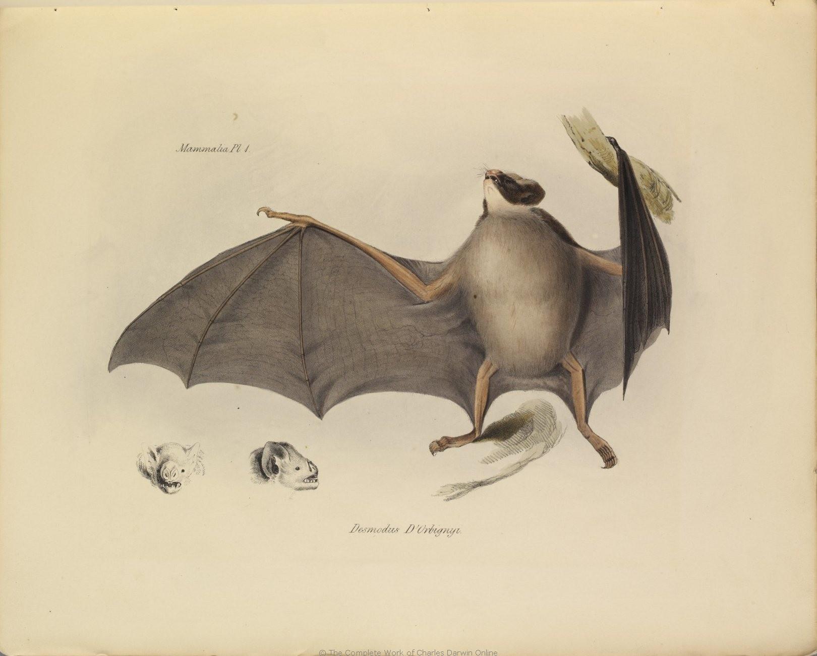 1838_Zoology_F8.2_023.jpg