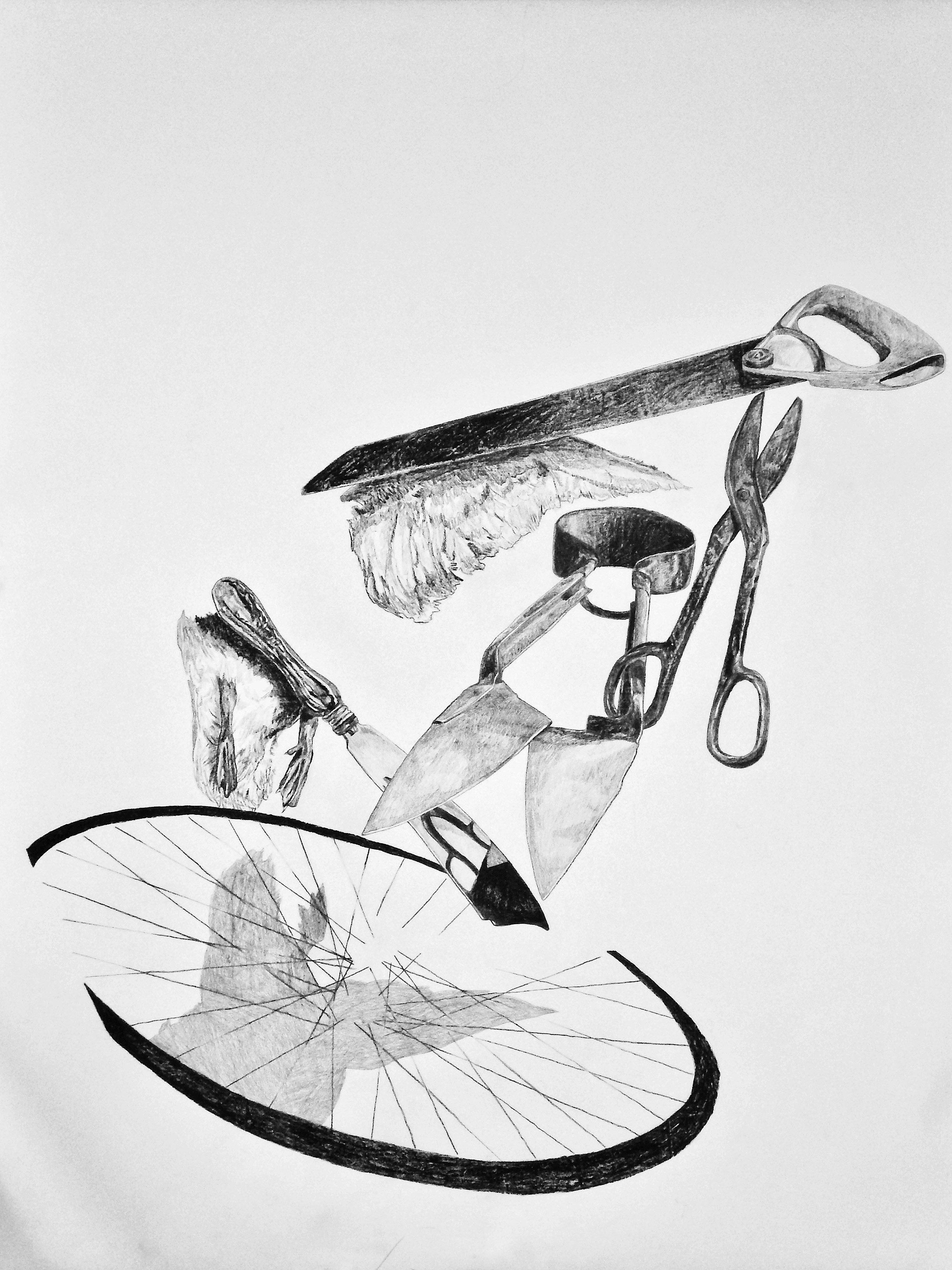 maidia bird image.jpg