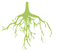 bottomtree-guroots-1.png