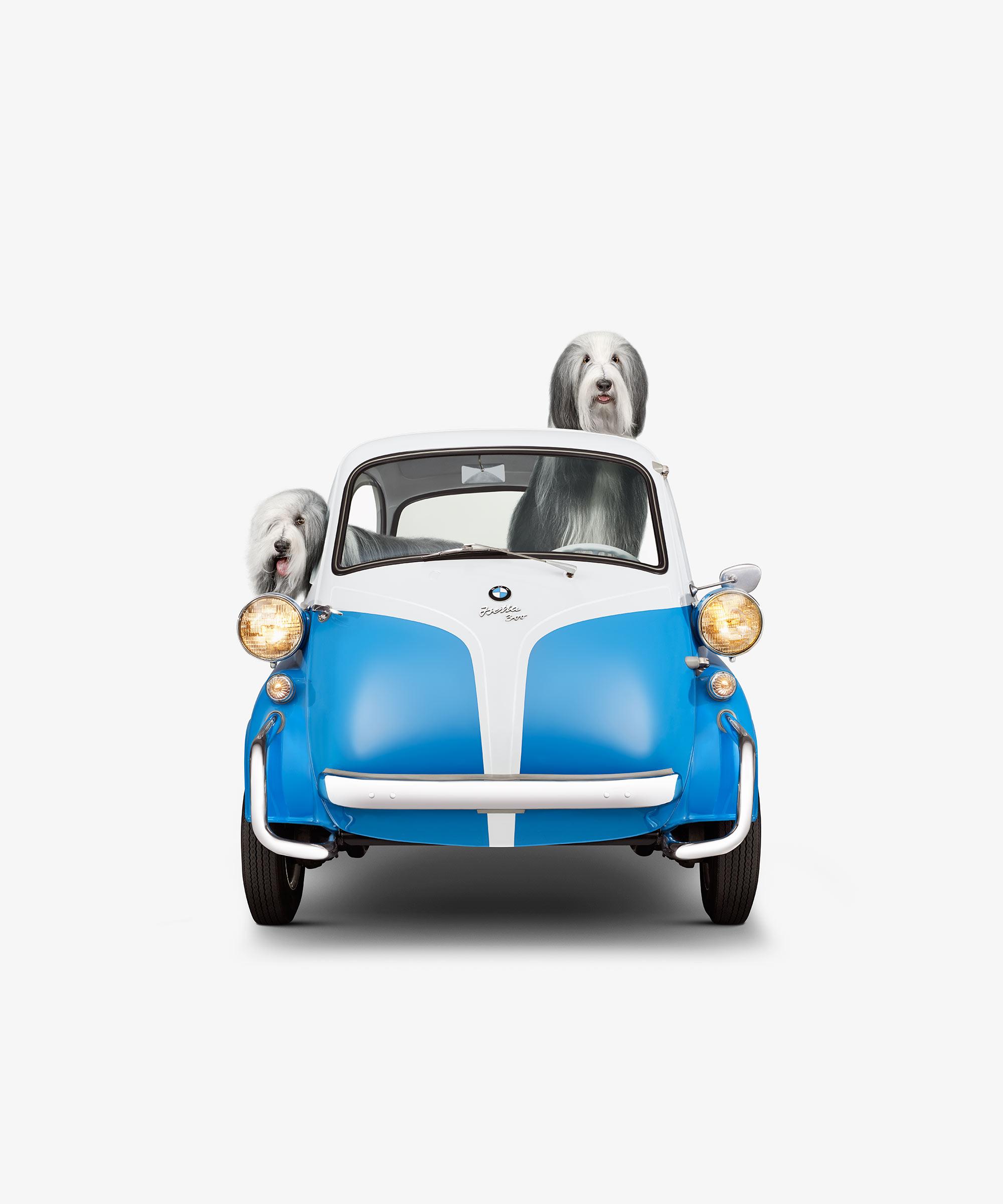 BMW Isetta & English Mastiff (17 x 17)