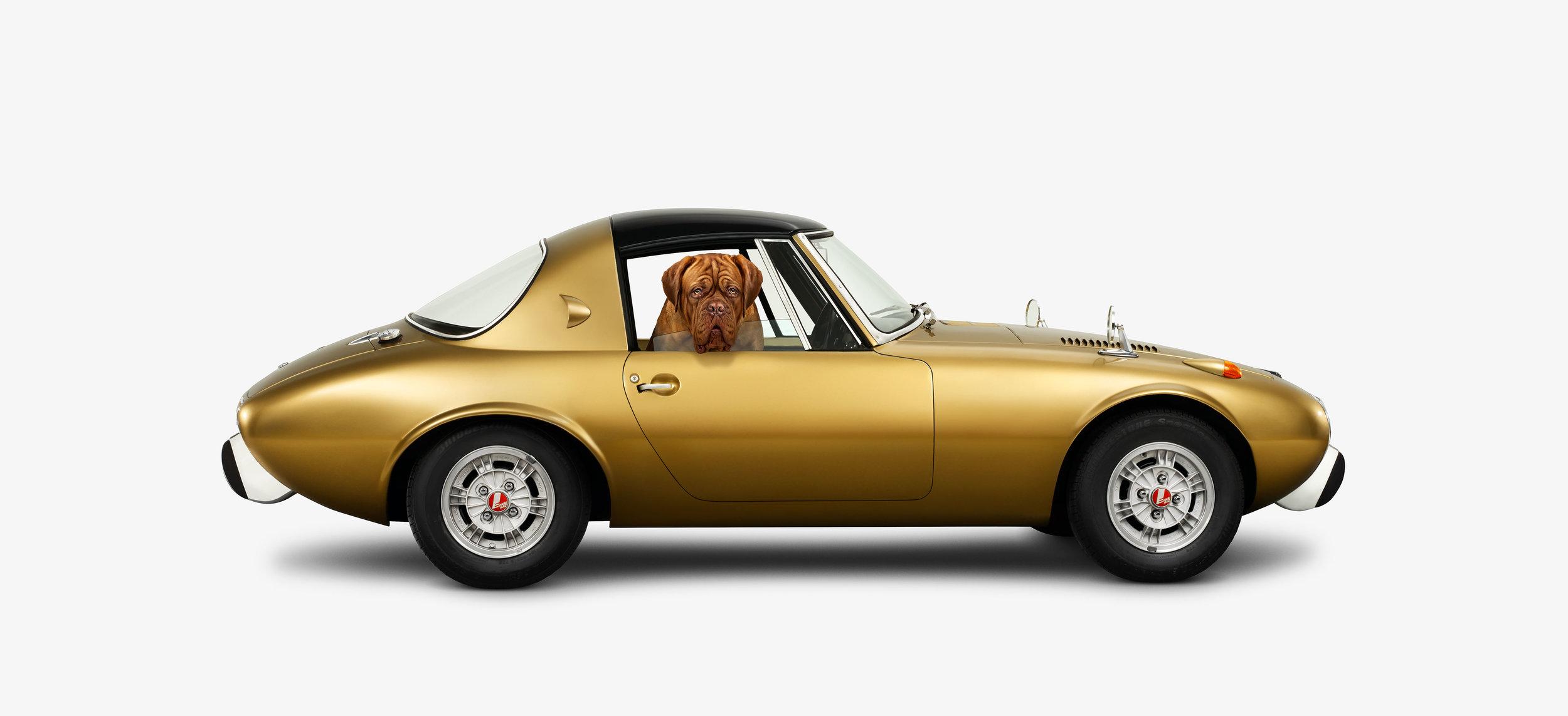Toyota 800 & Dogue de Bordeaux side (12 x 22)