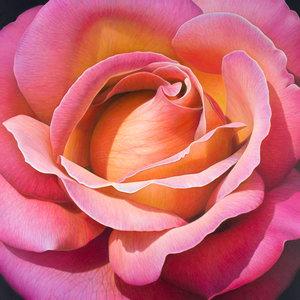 Flower Series #24