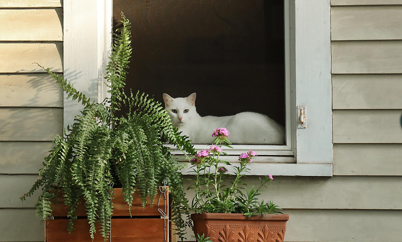 kittywindowwebcrop_6302.jpg