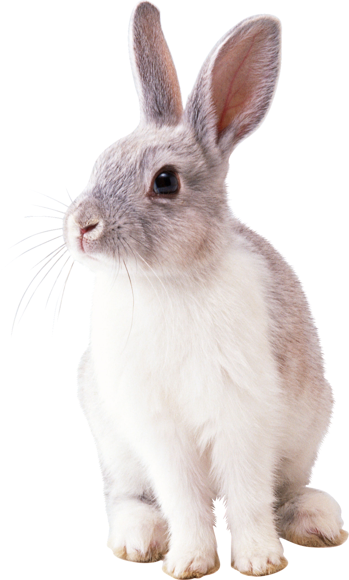 rabbit-2649157_1920.png