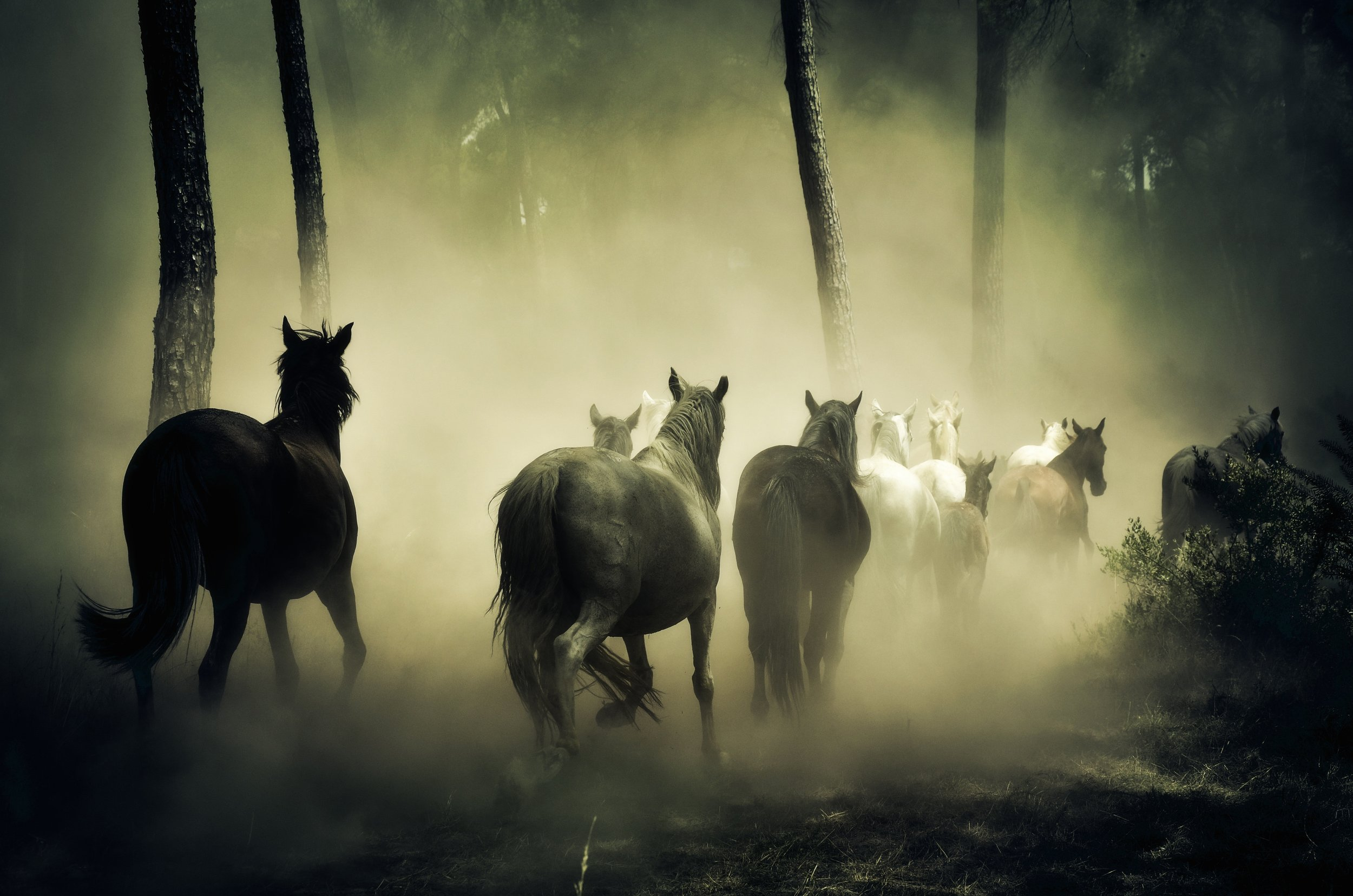 animals-fog-forest-219943.jpg
