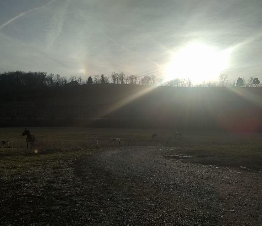 Horses+and+sun.jpg