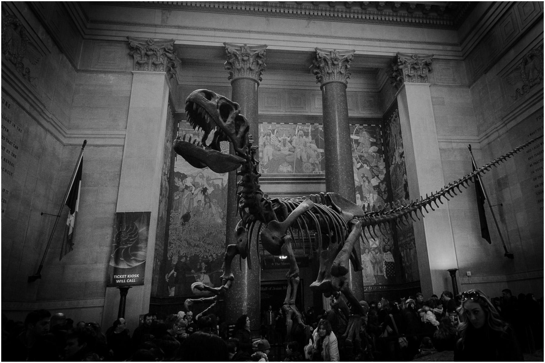 American-Museum-of-Natural-History_7.jpg