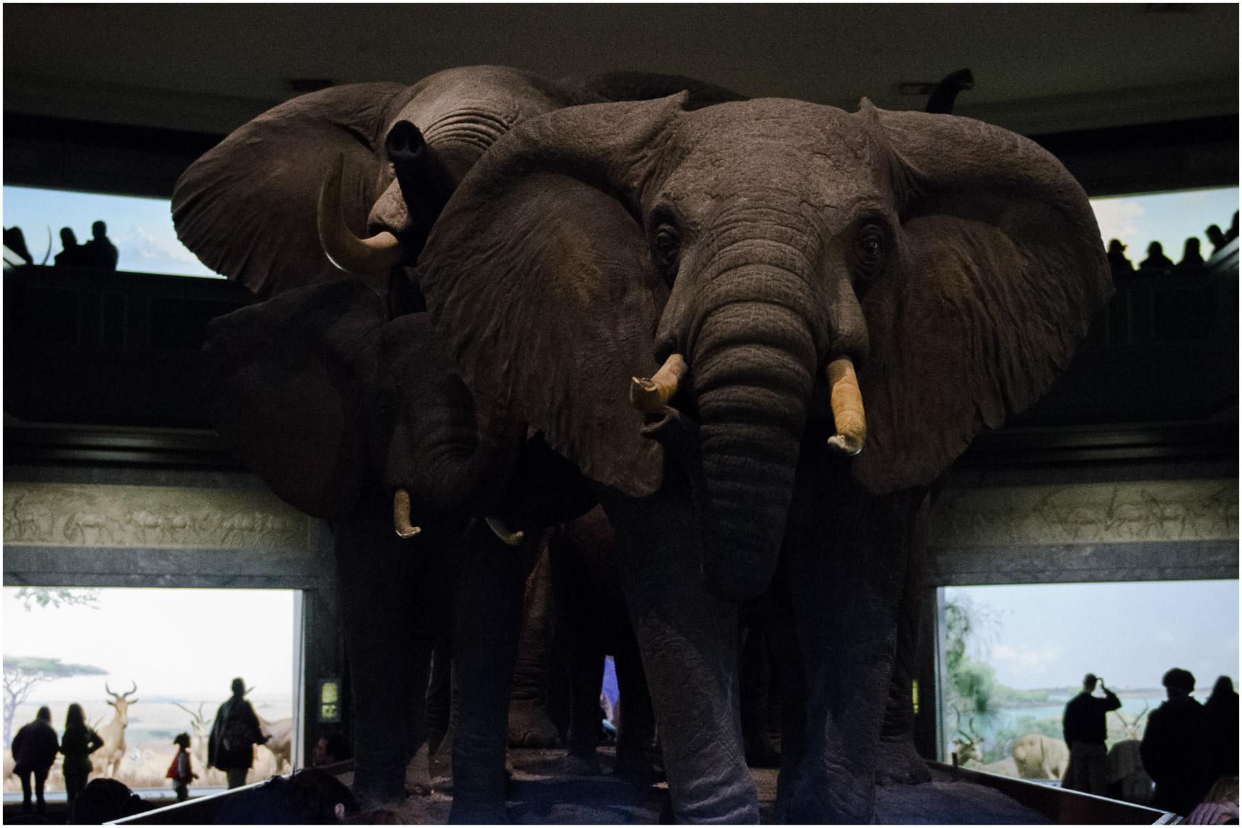 American-Museum-of-Natural-History_8.jpg