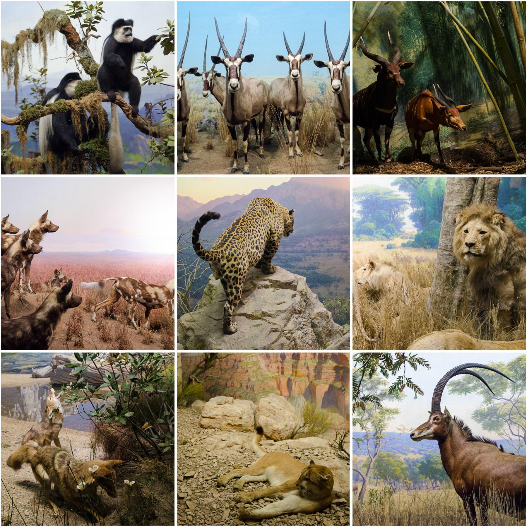 American-Museum-of-Natural-History_9.jpg