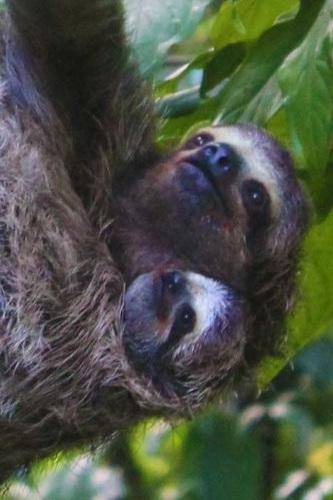 Sloth+and+baby+3_14_18.jpg
