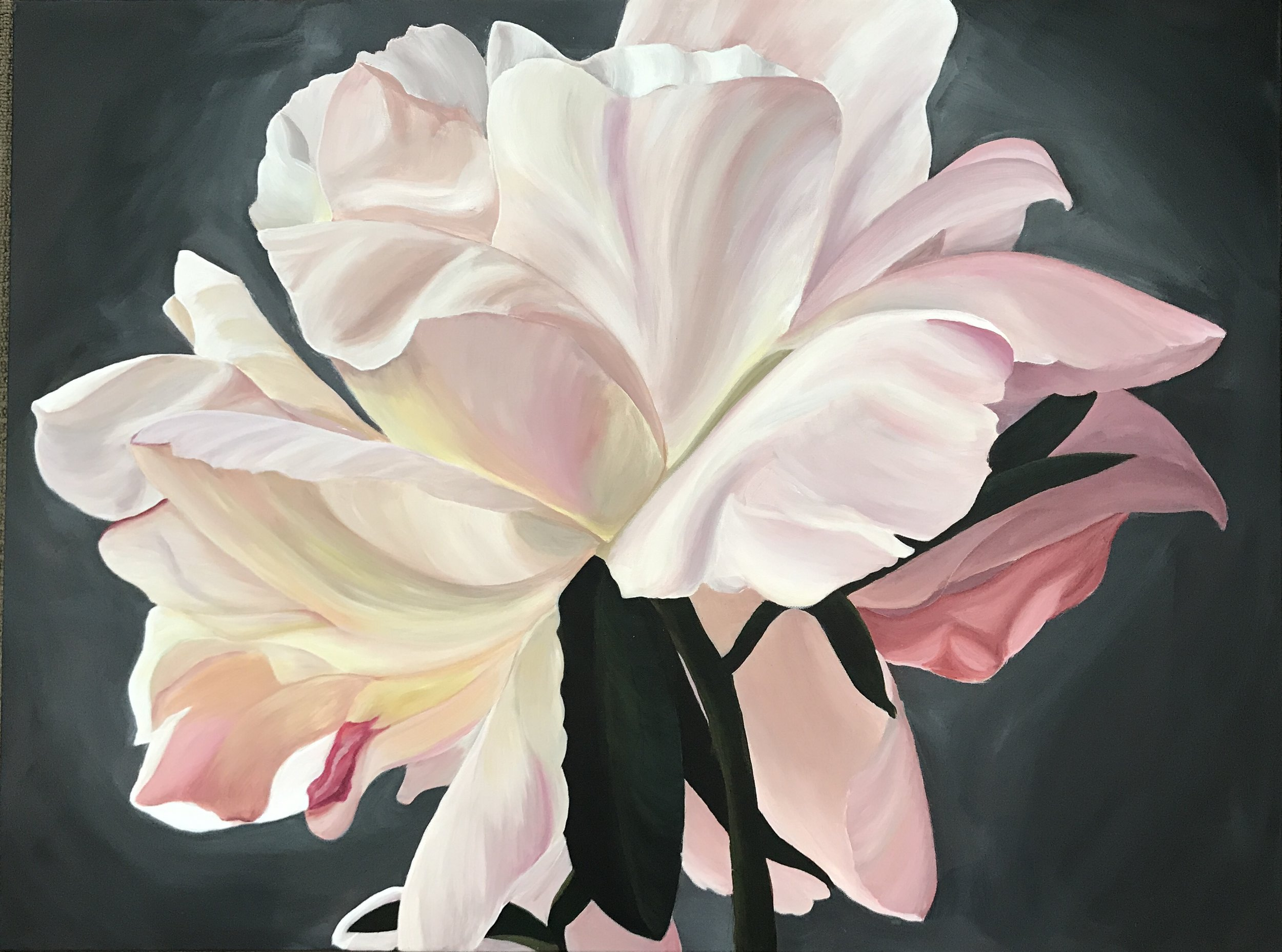 Angel's wings 76cm (W) x 101cm (H) $1,100  Another beautiful peony from France. The light kissing the petals gives them a dreamy feel, almost like Angels dancing in the light.