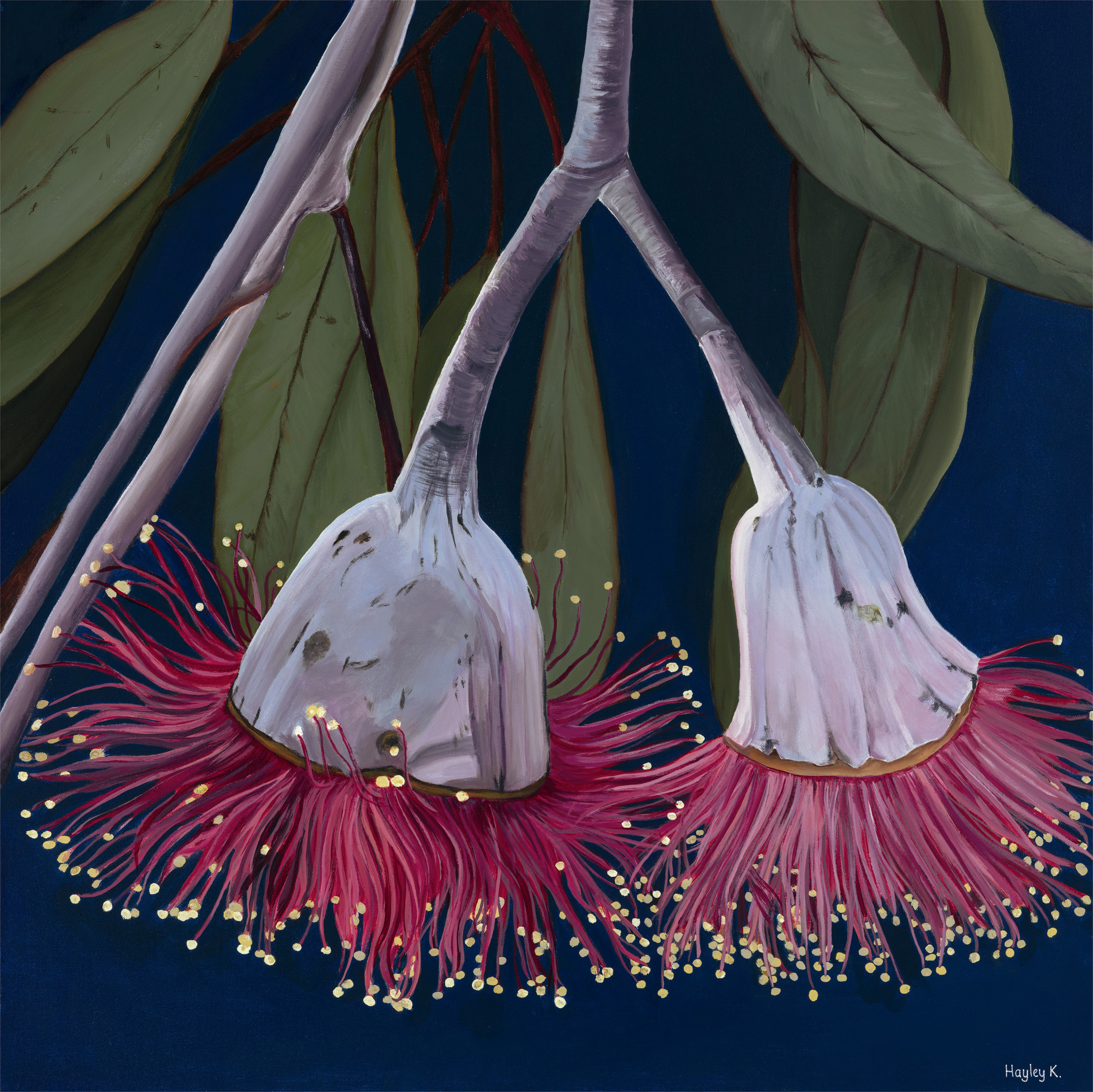 Crimson Beauty 76cm (W) x 76cm (H) $900  There are so many flowering Eucalyptus species when you start to take notice. They are all so beautiful, like little explosions of colour nestled in the green grey foliage of the incredible trees they grow on.