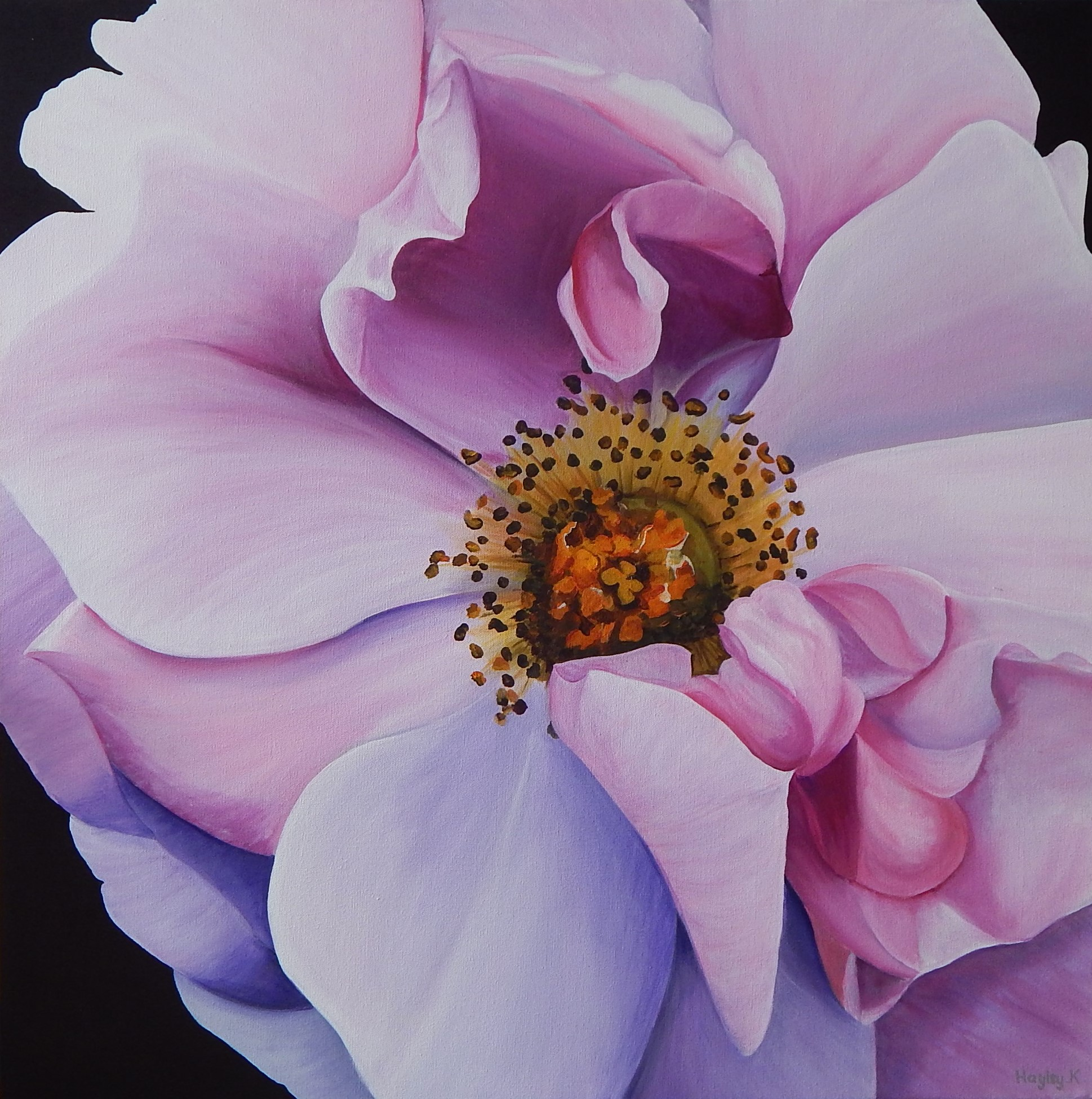 Entrancing 76cm (W) x 76cm (H) $800  This magical mauve rose was photographed on a family camping trip down South in WA. There is beauty wherever you go.