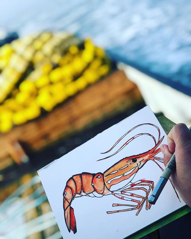 Casually drawing on the back deck while we travel a little. I really fucking love my job(s)🦐 . . . #jayneefritzingerart #shrimp #pugetsound #chumfishing #seinecation #commercialfishing #art #shrimpart #fishart #watercolor #micronpenart #alaskanartist #backdeckart #PNW #ocean #oceanart