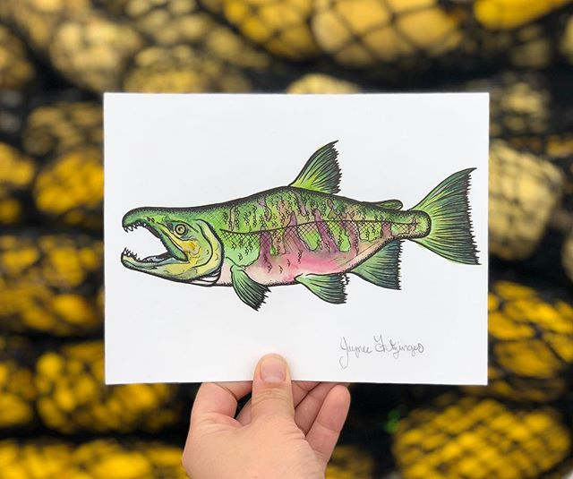 In honor of Puget Sound Fall fishing I drew up this little chum dude.... trying to summon them into our net 👹👹 . . . #jayneefritzingerart #fallchums #pugetsoundfallchums #chumsalmon #watercolorandink #micronpenart #salmonart #alaskanartist #oceanart #seining #commercialfishing #gnarlychum #favoritefish